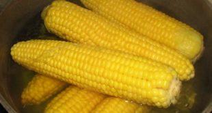 Процесс варки кукурузы
