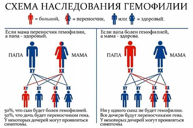 Схема наследования гемофилии