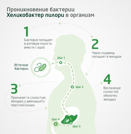 Проникновении Хеликобактер пилори в организм